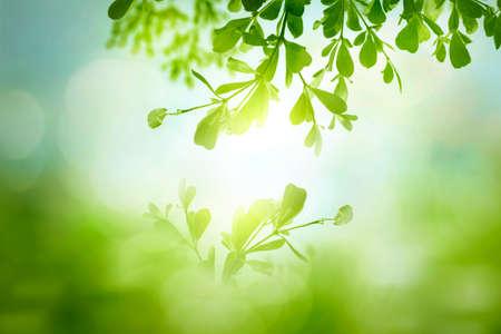 Foto de World environment day concept: green grass and blue sky abstract background with bokeh - Imagen libre de derechos