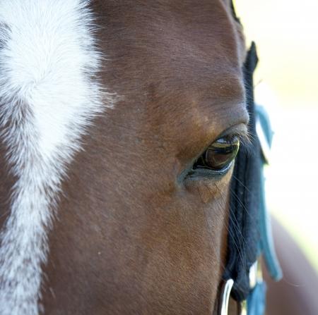 The horse's eyes