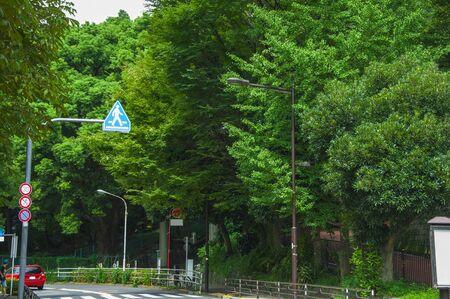 Wangwushoung191000131