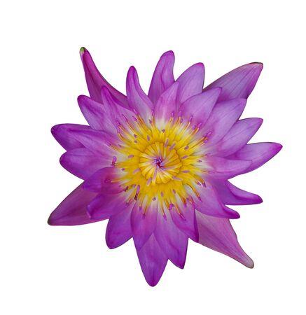 Photo pour Purple lotus on a white background. - image libre de droit