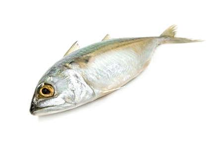 Photo pour Fresh mackerel fish isolated on white background - image libre de droit