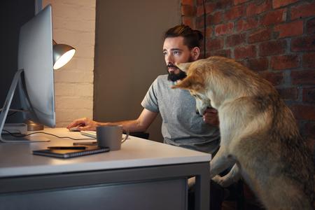 Foto de Curious husky dog pet  seeking owner's attention at his desk as he concentrates on working at his computer - Imagen libre de derechos