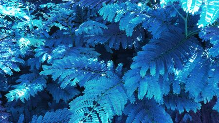 Photo pour tropical leaf forest glow in the dark background. High contrast. - image libre de droit