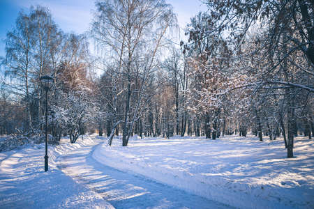 Photo pour Sunny day in park Future garden at winter in Moscow, Russia - image libre de droit
