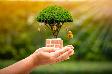Photo pour Woman hand hold the money bag of tree with growing on sunlight in the public park, Saving for business investment and give a loan concept. - image libre de droit