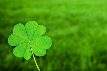 four leaf clover against grass