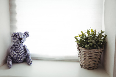 Toy and pot plant at home
