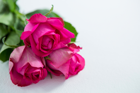 Close-up of bunch of pink roses on white background