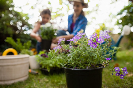 Close-up of purple flowering plants with mother and daughter gardening in background