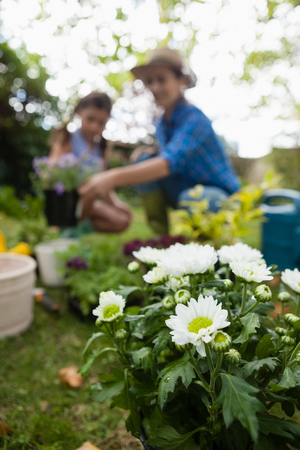 Close-up of white flowering plants with mother and daughter gardening in background