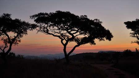 Bushveld Dusk