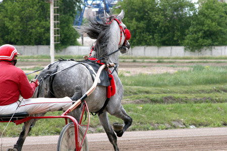 Beautiful horse trotting very fast at a harness horse race