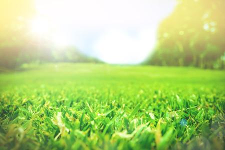 Close up green grass field with blur park background