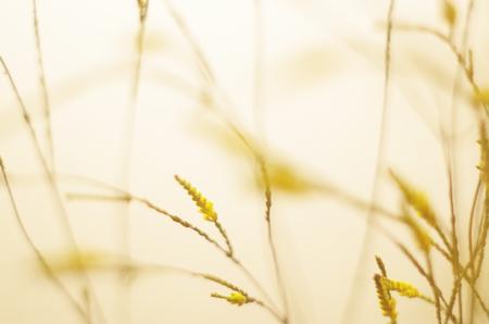 Weedsxyz181100016