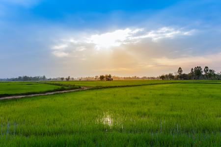 Photo pour Rice field on terrace hillside in NAN, Thailand. natural landscape of rice farm. cultivation agriculture - image libre de droit