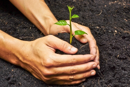 two hands holding, growing and caring a young green plant
