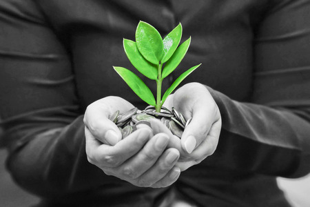 Palms with a tree growing from pile of coins   hands holding a tree growing on coins   csr green business   business ethics