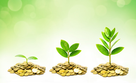 trees growing on coins   csr   sustainable development   trees growing on stack of coins