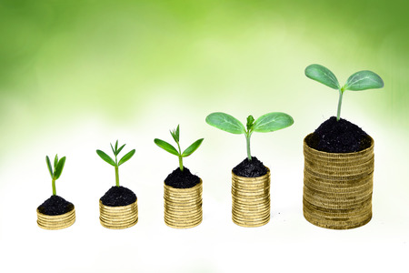 trees growing on coins   csr   sustainable development   economic growth   trees growing on stack of coins