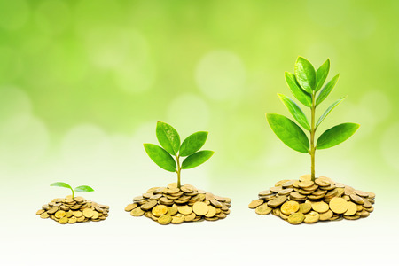 trees growing on piles of golden coins / business with csr practice