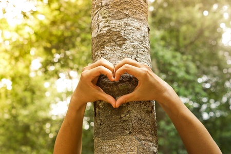 hands forming a heart shape around a big tree  protecting tree and love natureの写真素材
