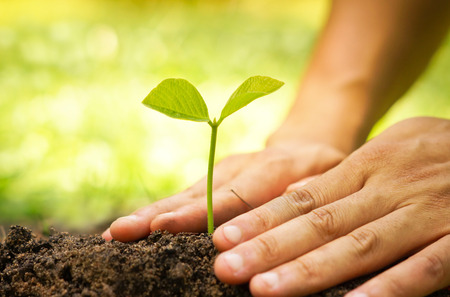 Photo for Hands of farmer growing and nurturing tree growing on fertile soil with green and yellow bokeh background - Royalty Free Image