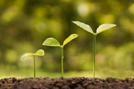 Photo pour trees growing on fertile soil in germination sequence - image libre de droit