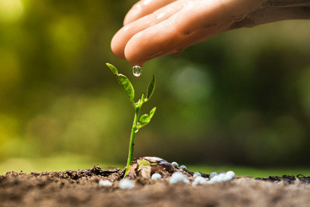 hand nurturing and watering a young plant / Love and protect nature concept / Nurturing baby plant with water and fertilizer