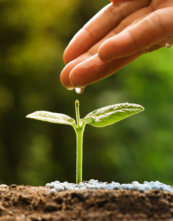 hand nurturing and watering a young plant  Love and protect nature concept  nurturing baby plant