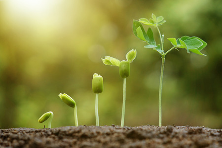 hand nurturing and watering young baby plants growing in germination sequence on fertile soil with natural green background