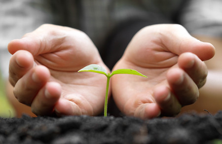 Agriculture. Hands growing and nurturing tree growing on fertile soil with green and yellow bokeh background / nurturing baby plant / protect nature