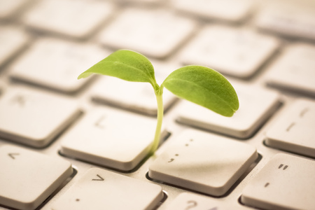 Photo pour Tree growing on a computer keyboard / Green IT and Computing - image libre de droit