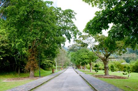 Photo pour Penang botanical garden - image libre de droit