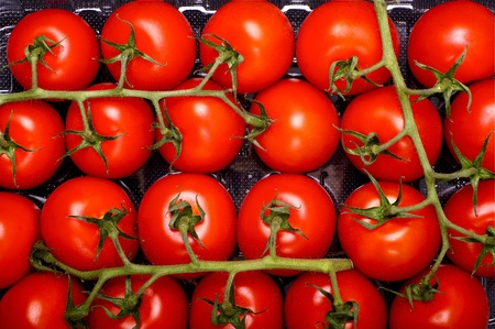 Photo pour Tomato Fruits - Fresh Tomatoes Straight from Farm. Tasty and Juicy Tomatoes. Food Photo Collection. - image libre de droit