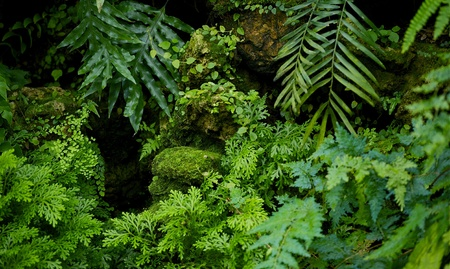 Rainforest Nature Background  Rainforest Plants Horizontal Photography