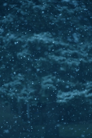 Falling Snow - Real Snow Flakes Photo Background
