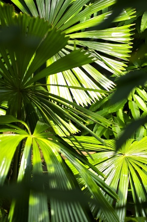 Inside the Jungle  Tropical Plants Vertical Photo  Tropical Photo Collection