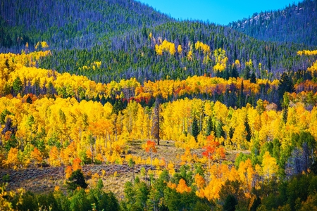 Colorful Colorado Autumn. Colorado October Landscape, United States.
