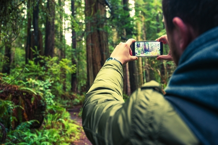 Taking Pictures Using Mobile Phone. Mobile Photography. Tourist Taking Picture of the Redwood Forest in Northern California, United States.
