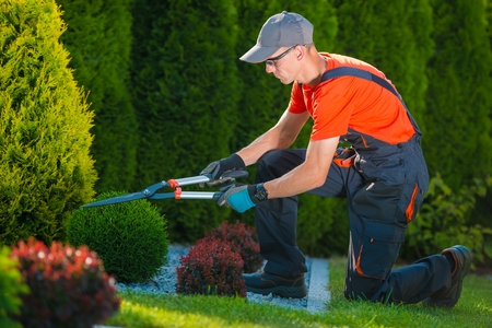 Foto de Professional Gardener at Work. Gardener Trimming Garden Plants. Topiary Art. - Imagen libre de derechos