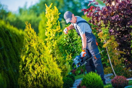 Photo for Firing Up Gasoline Hedge Trimmer by Professional Gardener. Garden Works. Trimming Hedge. - Royalty Free Image