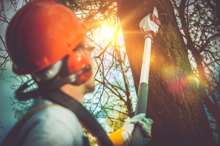 Foto de Tree Branches Pro Cutting. Unsafe Branches Removal by Extended Wood Cutter. - Imagen libre de derechos