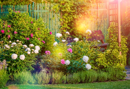 Photo pour Sunny Flowering Backyard Garden. Summer Garden Flowers. - image libre de droit