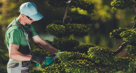 Photo pour Men Shaping Garden Trees. Caucasian Gardener in His 30s with Small Electric Plants Trimmer. Topiary Theme. - image libre de droit