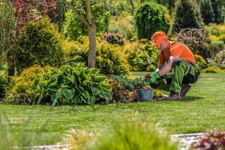 Foto de Professional Garden Worker. Caucasian Gardener and the Backyard Maintenance. Agriculture Industry Theme. - Imagen libre de derechos