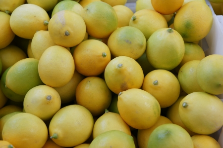 Meyer lemon, Citrus limon Me