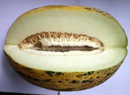 Cucumis melo var cantapulensis, Afghan melon, kabul melon, melon reticulated skin surface yellow with dark green patches, white sweet crisp flesh
