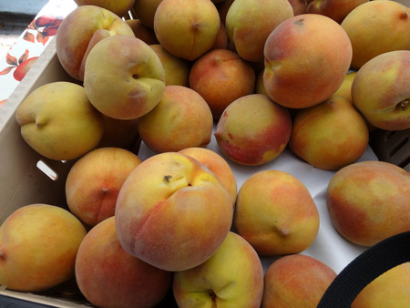 Sweet September Yellow Peach, Prunus persica, cultivar yellow firm skin with red tinge and yellow low acid sweet juicy flesh, late maturing cultivar.