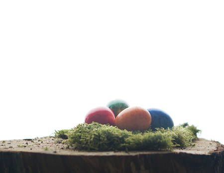 Easter green moos and colorful easter eggs at wooden block