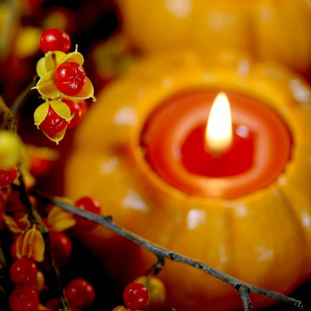 Photo pour fresh autumn bittersweet vines with berries just popped, mini pumpkin with candle; shallow DOF   - image libre de droit